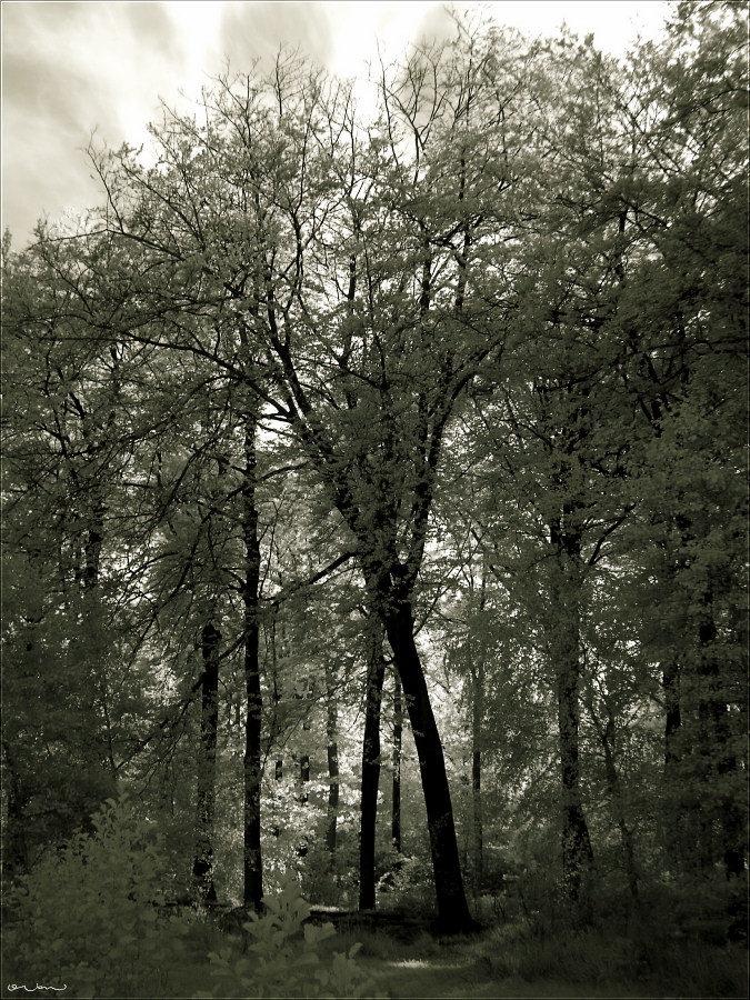 Moody Forest #1