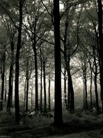 Moody Forest #2