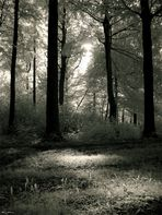Moody Forest #3