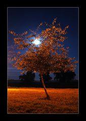 Moon on a tree