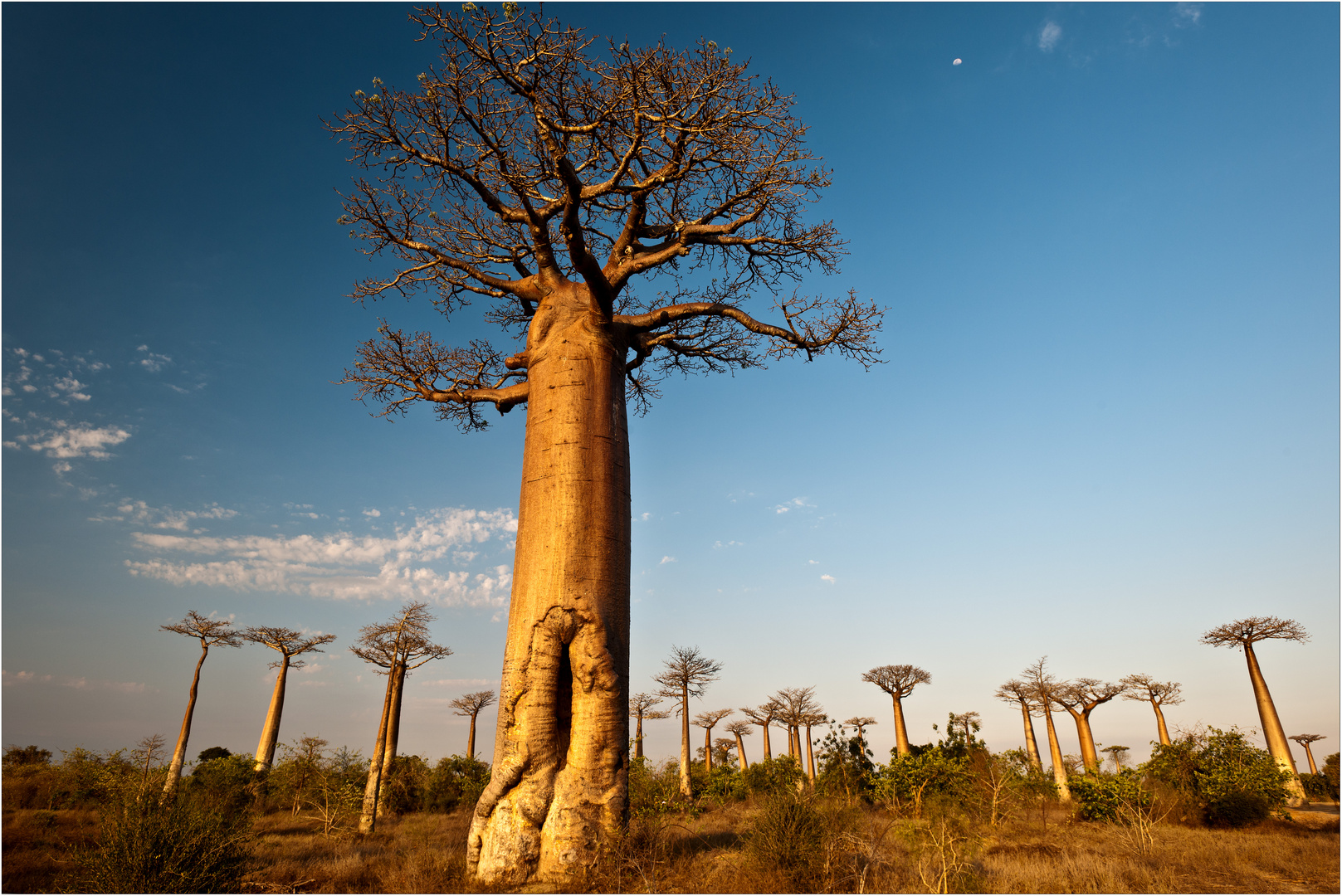 [ Moon over Baobab Alley ]