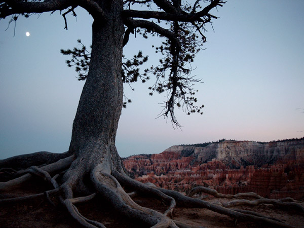 Moon over Bryce Canyon