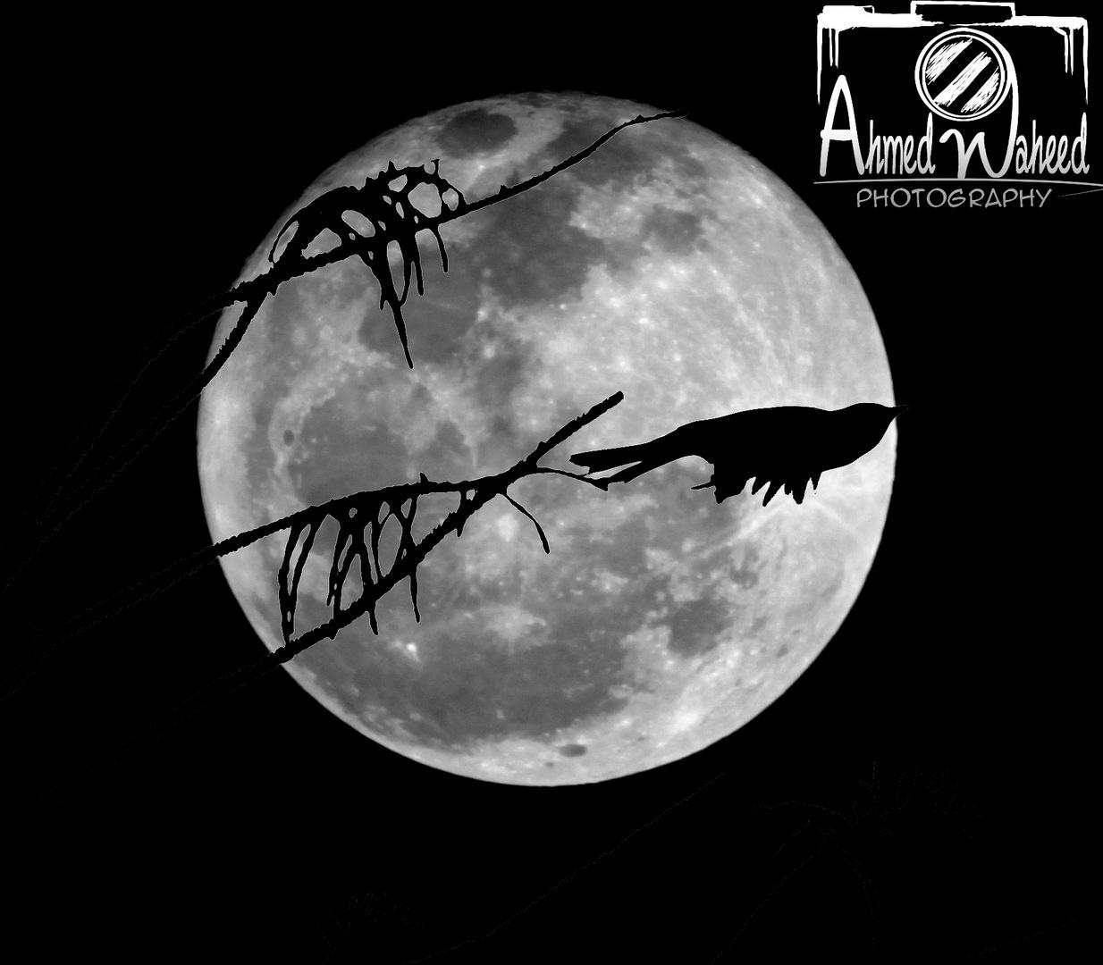 Moon Sillouette