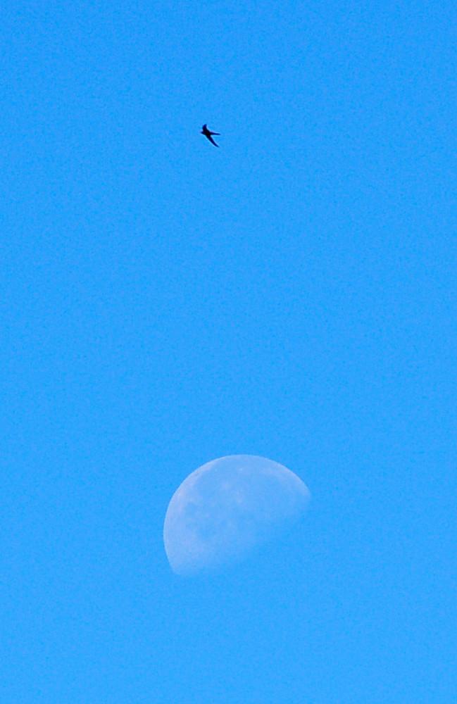 Moonbird ;)