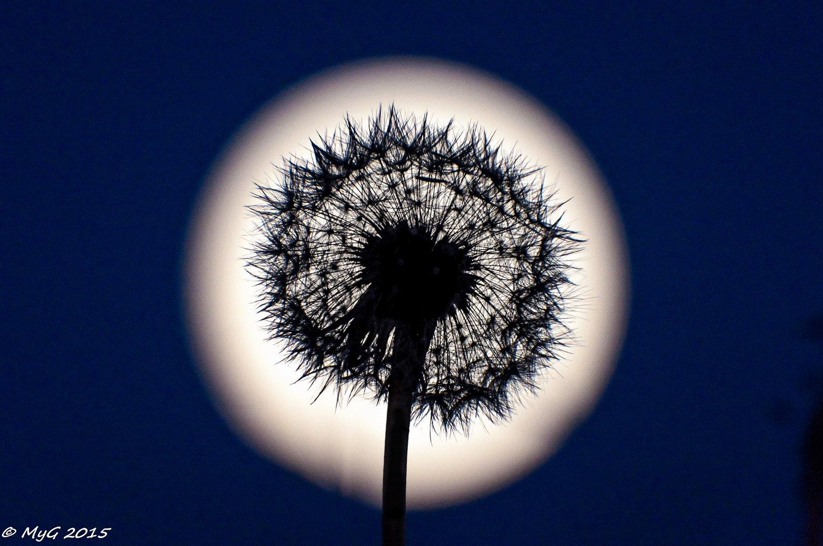 Moondelion  -  Pissenlune