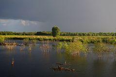 Moor im August