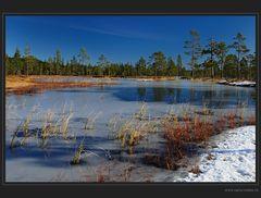 Moor im ersten Schnee