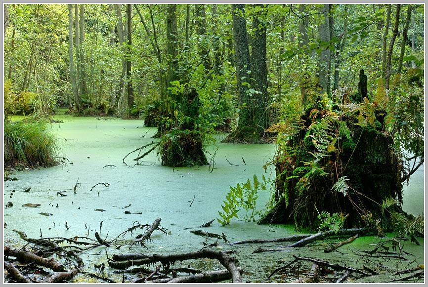 Moor im Nationalpark Jasmund, Rügen