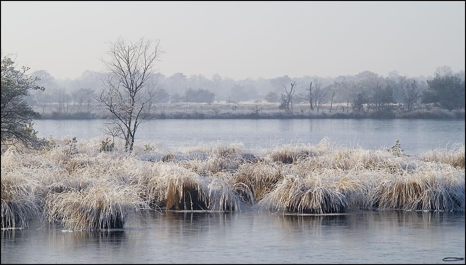 Moor im Winter 2
