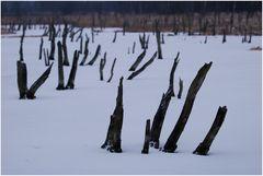 Moor im Winter