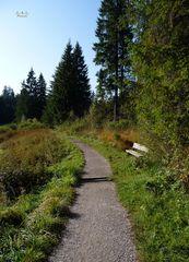 """""""Moor zum Waldweg in Richtung Siede Alpe"""""""