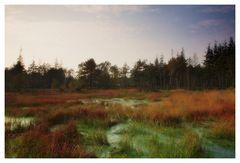 Moorgebiet in der Bordelumer Heide (Nordfriesland)