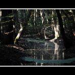 Moorlandschaft in Mecklenburg