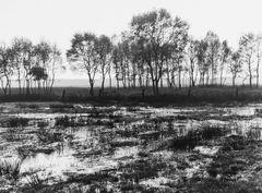 Moorlandschaft (SW Analog Foto)