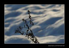 Moorpflanze im Schnee