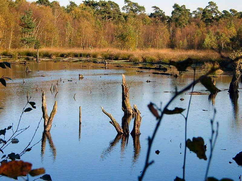 Moorsee zu Herbstbeginn