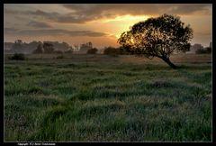 Moorwiese bei Sonnenaufgang - Swamp meadow at sunup