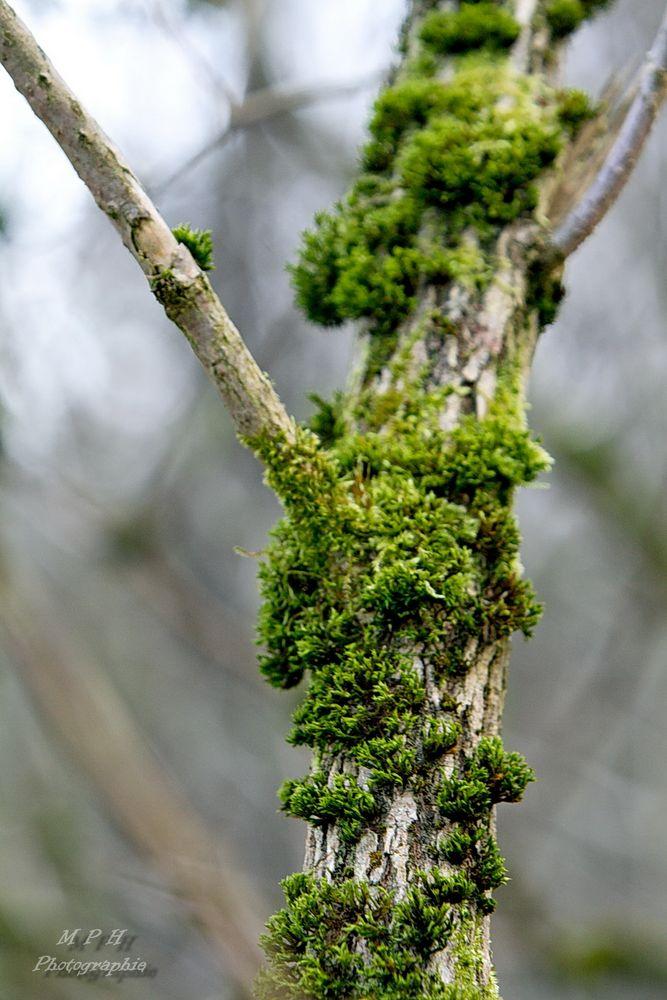 Moos am Baum