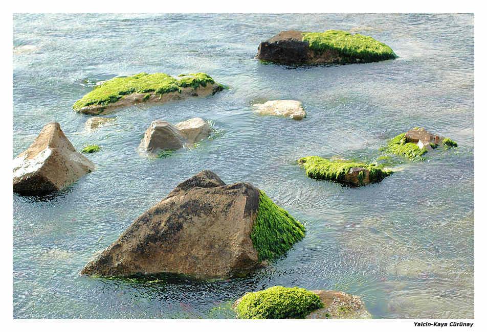 Moos im Meer