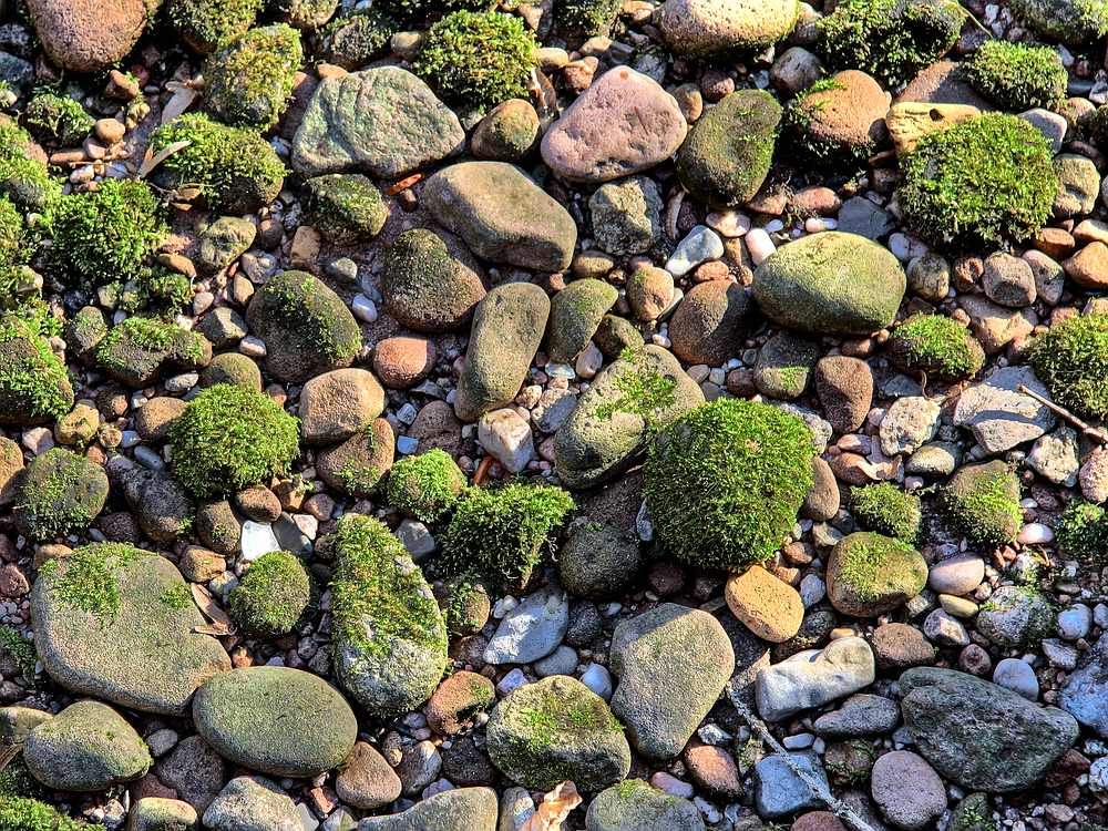 Moos zwischen Steinen