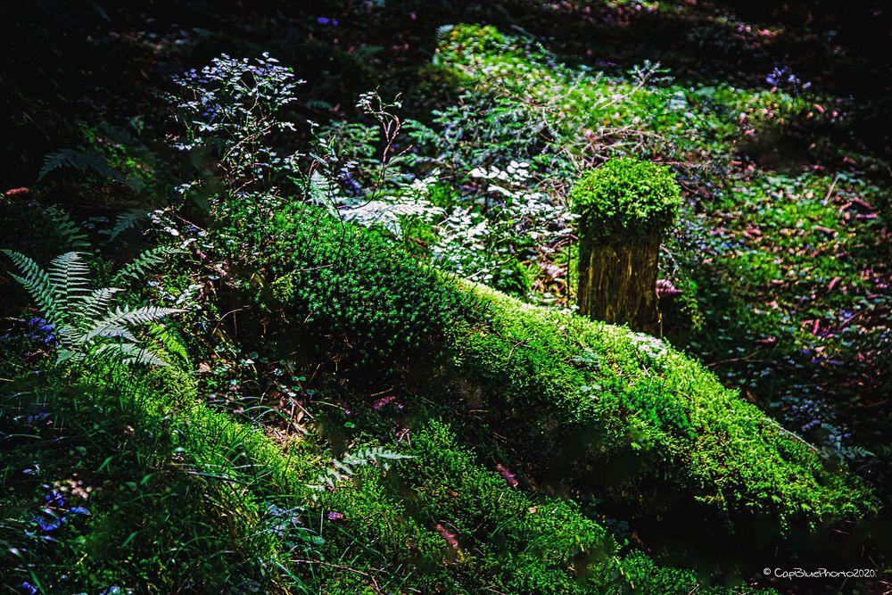 Moosbeet im Wald des Omerbachs Nähe Kropfmühle