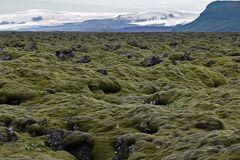 Moosbewachsene Lava in Island (2)