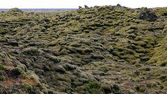 Moosbewachsene Lava in Island (Eldhraun)