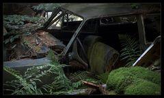 Moosgrünes Gewächshaus - im Tal der toten Autos