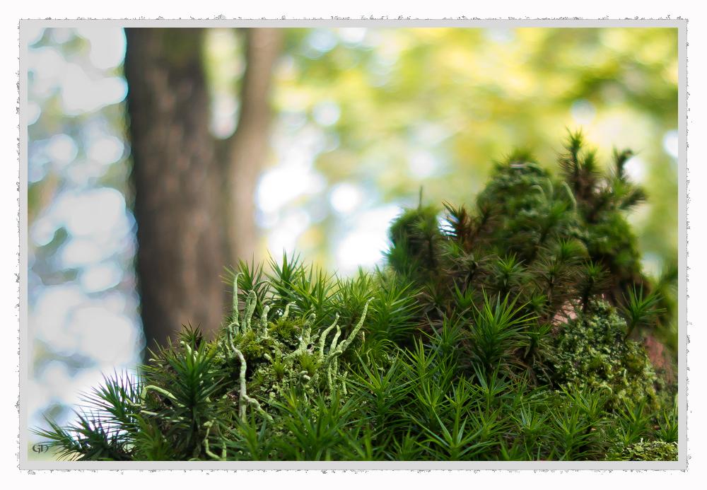 Moosstrukturen im Herbst