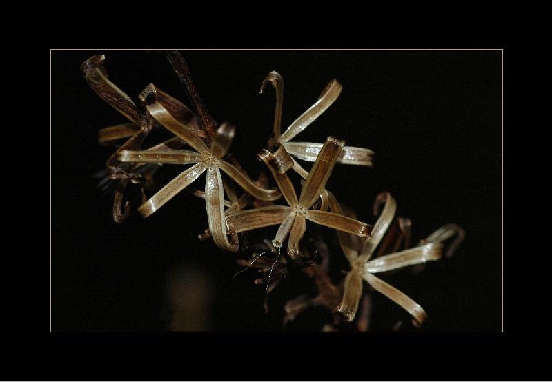 Morbide Sterne