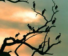 Moremi Nationalpark im Abendlicht