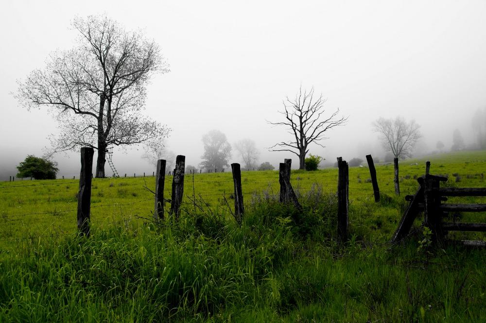 morgen in nebel