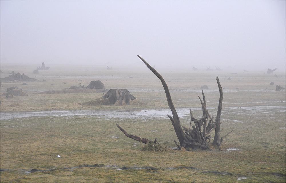 Morgen - Nebel