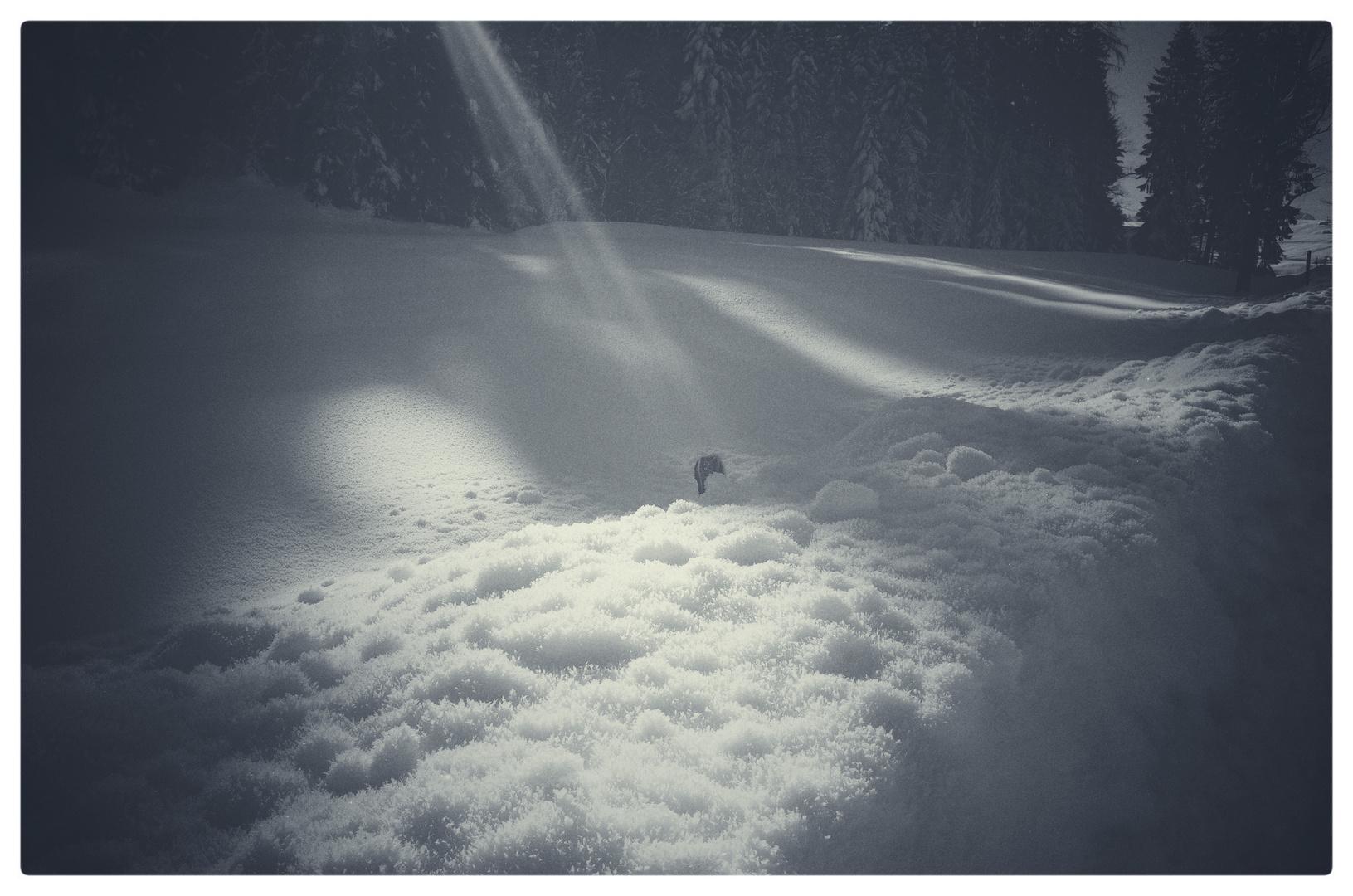 morgen . winter . licht