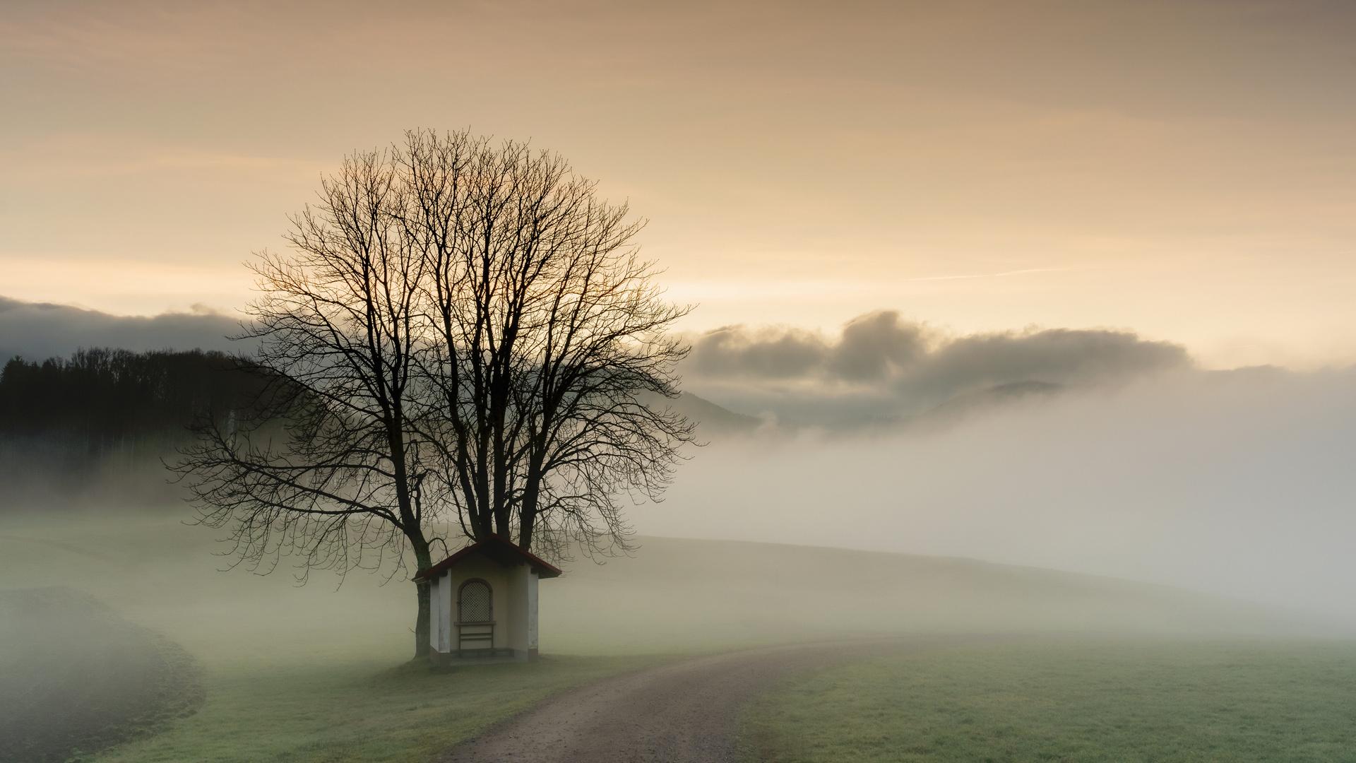 Morgendliche Nebelstimmung.
