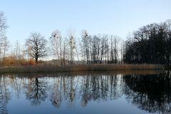 Morgendliche Ruhe am Teich.