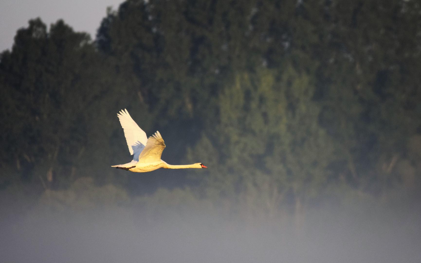Morgendlicher Flug