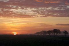 Morgendlicher Start der Kraniche in Linum