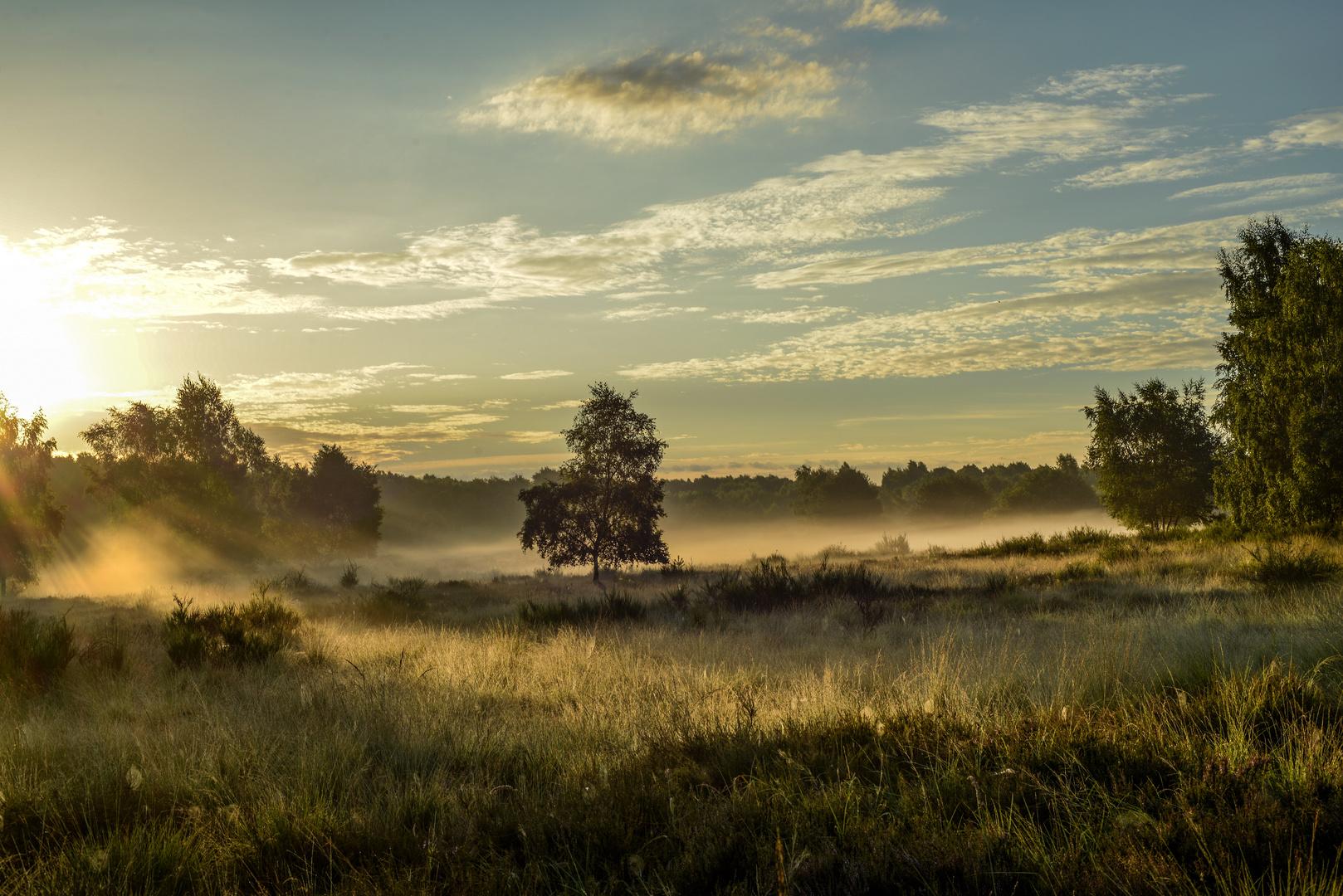 Morgendliches Lichtspiel