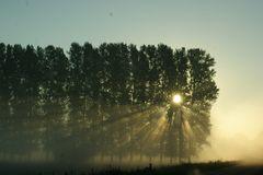 morgenfahrtlicht