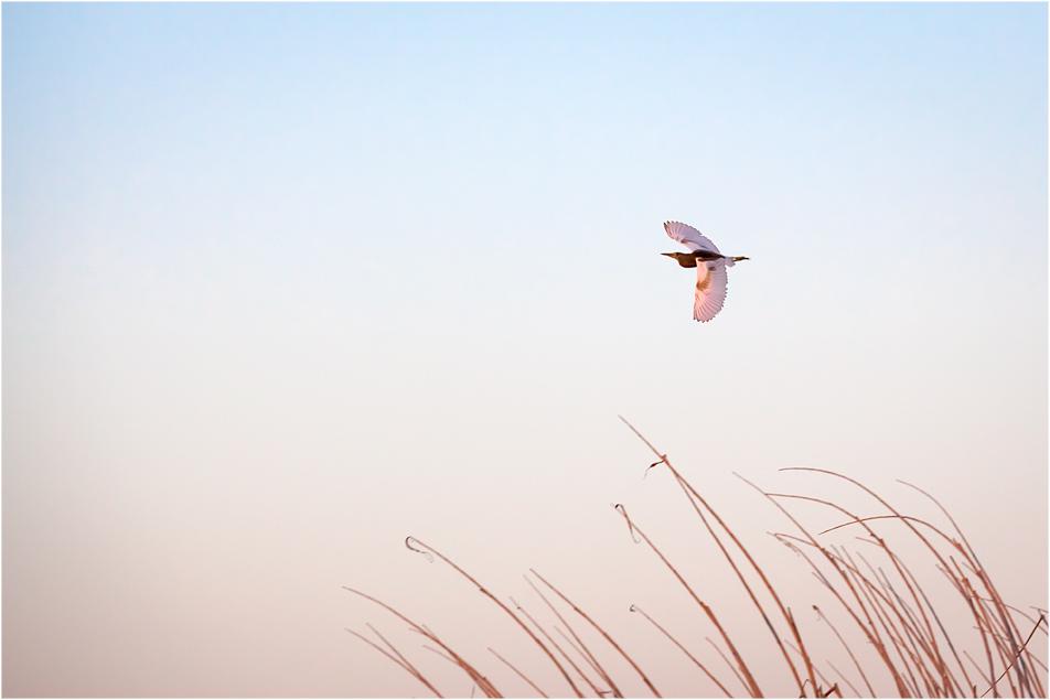 morgenflug