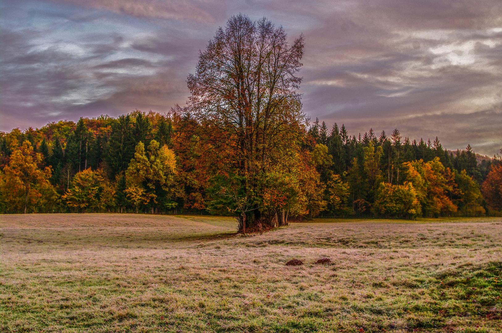 Morgenfrost im Slowenischen Karst
