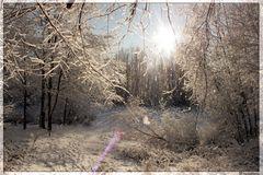 Morgenglitzern im Wald bei Blankenfelde (Berlin)