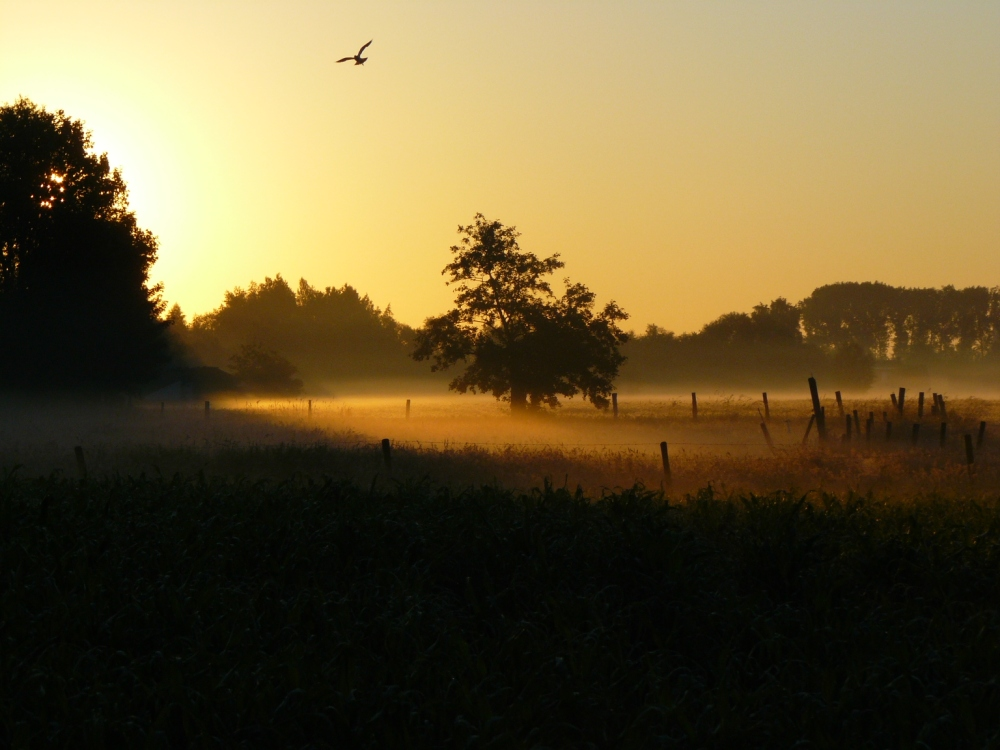 morgenglorie