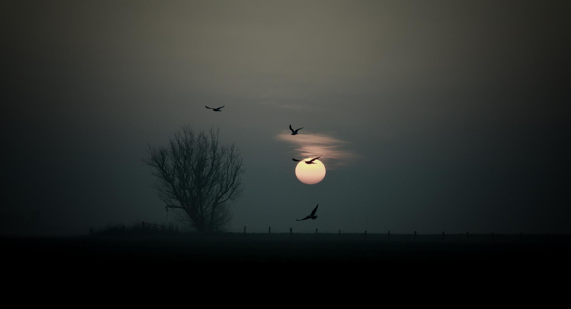 Morgengrauen