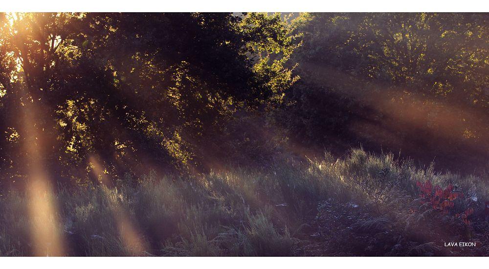 Morgengruß aus der Heide I