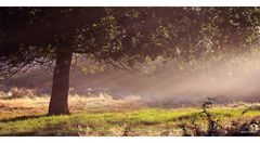 Morgengruß aus der Heide II
