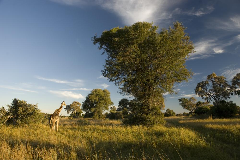 Morgenlandschaft in Botswana