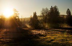 Morgenlicht II