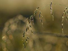 Morgenlicht im Herbst...
